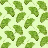 无缝的银杏树叶子样式墙纸 免版税库存图片