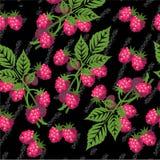 无缝的难看的东西莓果纹理529 皇族释放例证