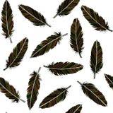 无缝的鸟羽毛 与种族分界线样式的羽毛 皇族释放例证