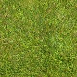 无缝的绿草纹理 免版税库存图片