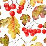 无缝秋天的模式 库存照片