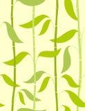 无缝竹的模式 免版税图库摄影