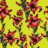 无缝红色百合的样式 夏天秋天开花纺织品汇集 库存照片