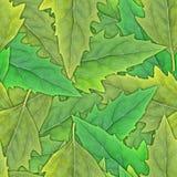 无缝绿色叶子的模式 库存图片