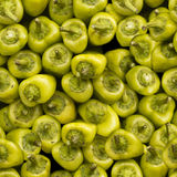 无缝绿色辣椒粉的模式 免版税库存照片