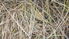 无缝背景的干草 库存照片