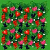 无缝背景的浆果 向量例证