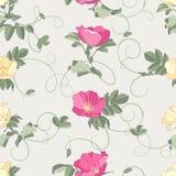 无缝背景的玫瑰 免版税图库摄影