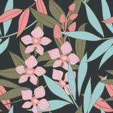 无缝花卉兰花的模式 免版税库存照片