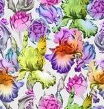 无缝花卉的模式 五颜六色的春天传染媒介背景 库存图片