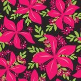 无缝花卉的模式 在黑色的桃红色花 免版税库存图片