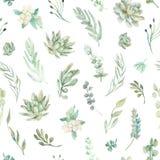 无缝花卉的模式 多汁植物,蕨,刺 免版税图库摄影