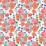 无缝花卉的模式 开花红色 库存图片