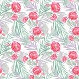 无缝花卉的模式 开花红色 图库摄影