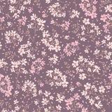 无缝花卉的模式 开花装饰物 夏天庭院纹理 图库摄影