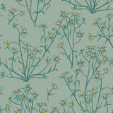 无缝花卉的模式 背景花光playnig 华丽墙纸w 库存照片