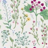 无缝花卉的模式 背景花光playnig 装饰庭院fl 免版税库存图片
