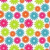 无缝花卉的模式 花纹理 雏菊 免版税图库摄影