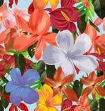 无缝花卉的模式 免版税库存图片
