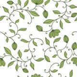 无缝花卉绿色的模式 库存照片