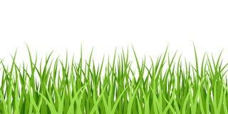 无缝草绿色的例证 图库摄影