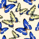 无缝蓝色的蝴蝶 免版税库存照片