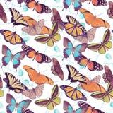 无缝蝴蝶的模式 库存图片