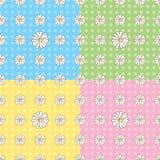 无缝雏菊的模式 库存照片