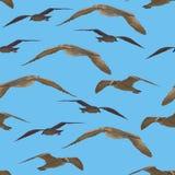 无缝鸟的鸥 免版税库存图片