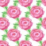 无缝水彩手拉的玫瑰色花的传染媒介 库存图片
