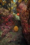 无脊椎在海带林冠层下 库存图片