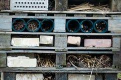 无脊椎的动物冬眠的场所 免版税库存照片
