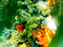 无脊椎覆盖物美洲红树根在博内尔岛 库存照片