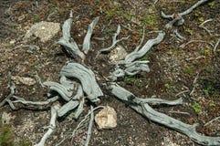 无色的死的灌木的枝杈在高地的 库存照片