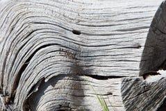 无色的纹理特写镜头在腐朽的树干的 免版税图库摄影