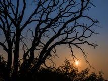 无芒果树忘记日出 图库摄影