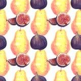 无花果和梨水彩样式在白色 向量例证