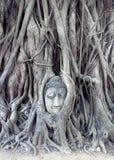 无花果树长满的菩萨顶头在Wat Mahathat 免版税库存图片