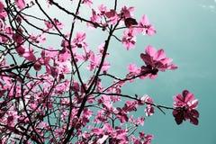 无花果树,自然的艺术性的颜色 库存图片