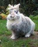 无辜的兔子 免版税库存图片
