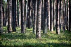无边的森林 库存图片