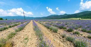 无边的淡紫色领域在南保加利亚 库存照片