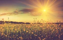 无边的领域和开花的五颜六色的黄色花在阳光下光芒 库存照片