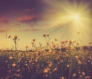 无边的领域和开花的五颜六色的黄色花在阳光下光芒 图库摄影