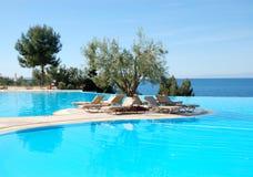 无限橄榄色池游泳结构树 免版税库存图片