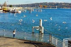 日内瓦湖 库存图片