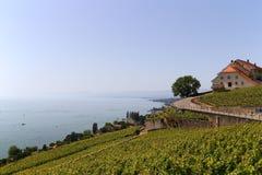 日内瓦湖lavaux瑞士葡萄园 免版税库存照片