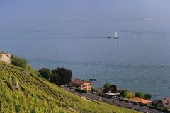 日内瓦湖lavaux瑞士葡萄园 免版税库存图片