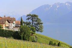 日内瓦湖lavaux瑞士葡萄园 图库摄影