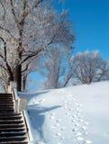 日冬天 免版税图库摄影
